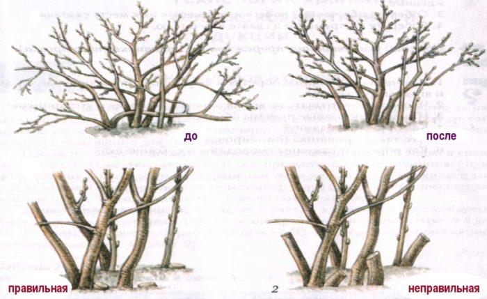 foto-2-106